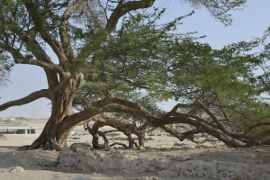 The Tree of Life (Bahrain)