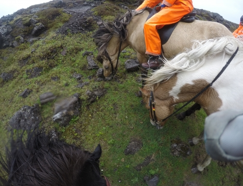 An Afternoon Riding Icelandic Horses